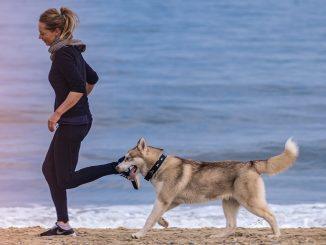 Les avantages d'avoir un animal de compagnie pour notre santé