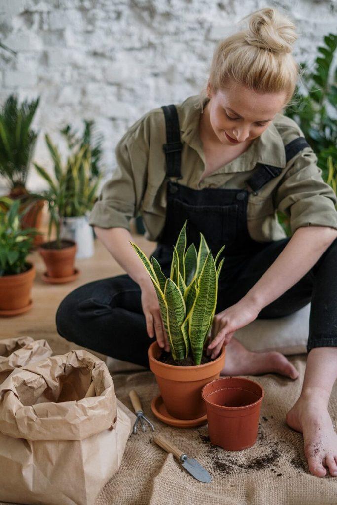 un personne plantant une plante