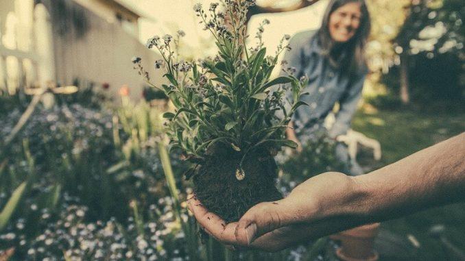 Travailler dans le jardin vous permet de rester en bonne santé physique et mentale
